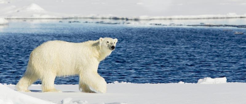 Fakten über Schnee und Eis