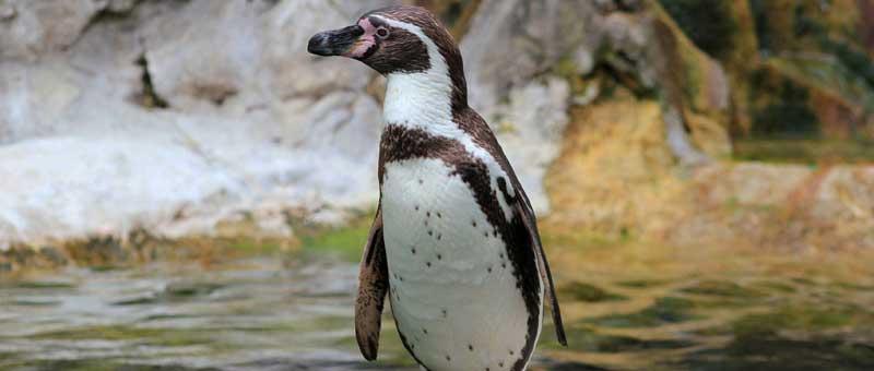 Ein Pinguin als Freund