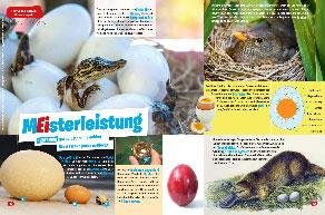 Alles über Ei und Osterei: Infos und Basteltipps für Grundschüler