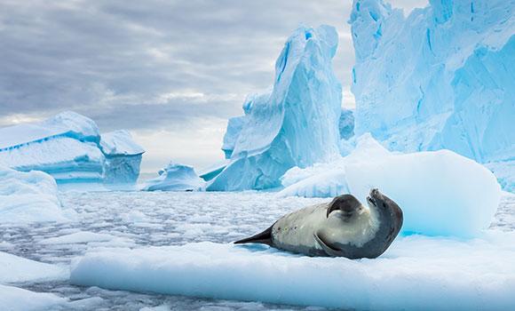 Arbeitsblätter Arktis und Antarktis