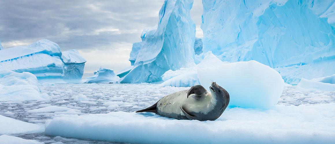 Antarktis Leben