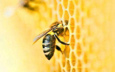 Bienen machen Honig