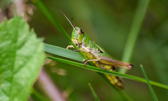 Arbeitsblätter Insekten