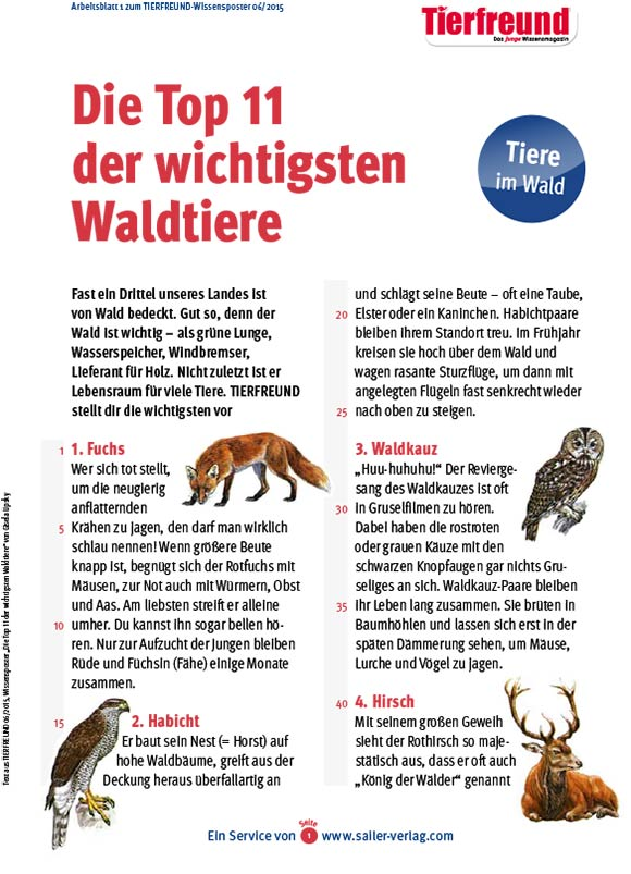 Arbeitsblätter über Waldtiere 1