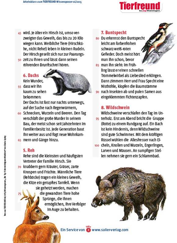 Arbeitsblätter über Waldtiere 2