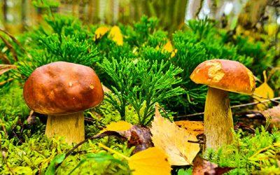 Alles über Pilze