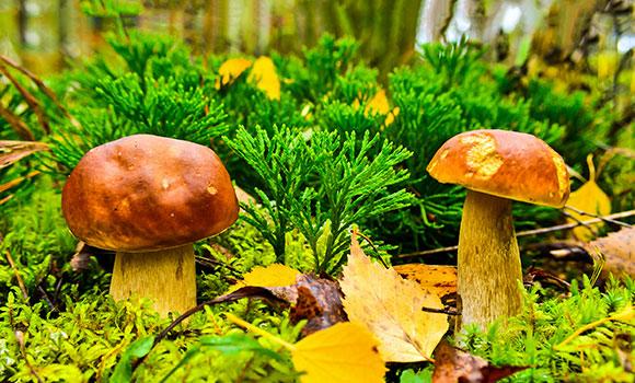Arbeitsblätter Alles über Pilze
