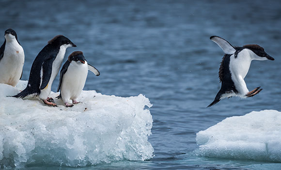 Arbeitsblätter Pinguine