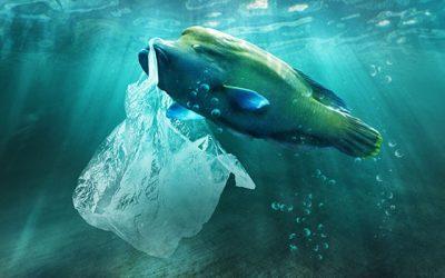 Müll und Plastik im Meer