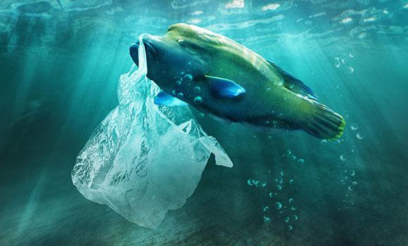 Arbeitsblätter Plastik im Meer