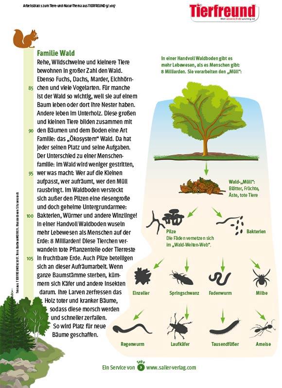 Arbeitsblätter Lebensraum Wald 3