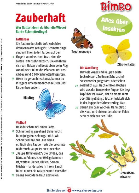 Arbeitsblätter Insekten-1