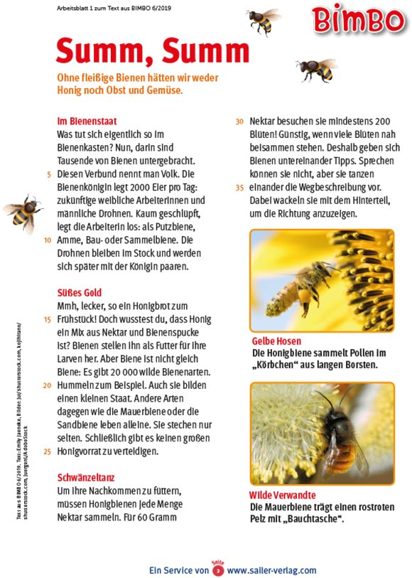 Arbeitsblätter Insekten-3