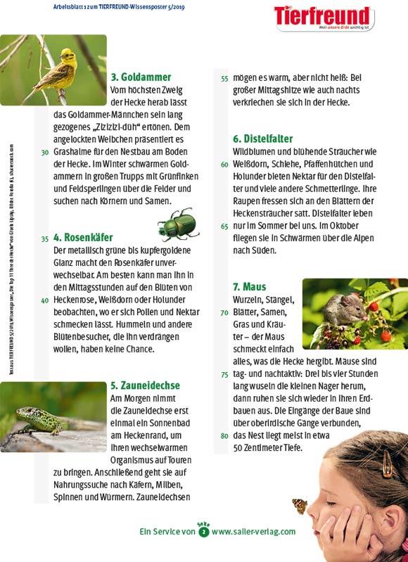 Arbeitsblätter Tiere der Hecke-2