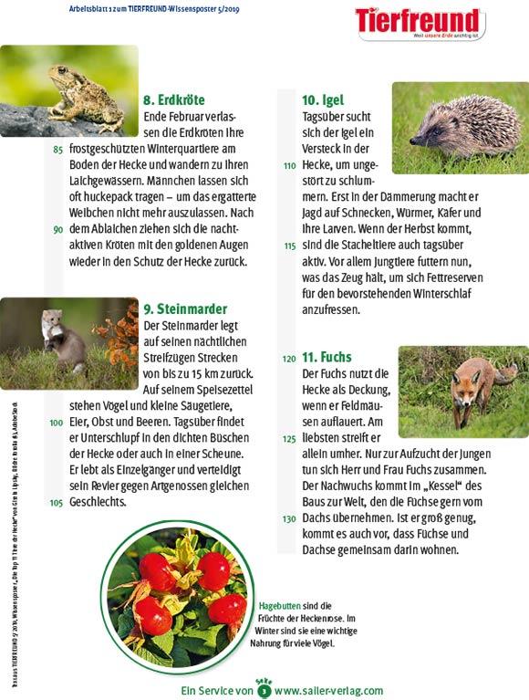 Arbeitsblätter Tiere der Hecke-3